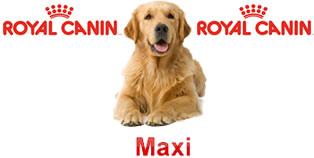 Perros Maxi