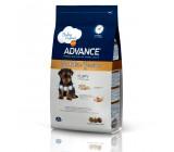Advance Yorkshire Junior Puppy
