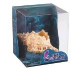 Atlantis Caracola Decoración Acuario