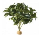 Arbusto Laurel De Seda