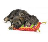 Manta Caliente Para Gatos Y Perros