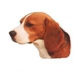 Pegatina Beagle