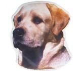Labrador Retriever Adesivo