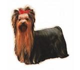 Yorkshire Terrier Completa